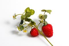 Ветка клубники с ягодами и цветками.