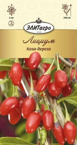 Семена Лициум Коза-дереза, кустарник