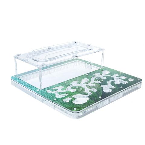 Antrum XL зеленый + колония Camponotus nicobarensis