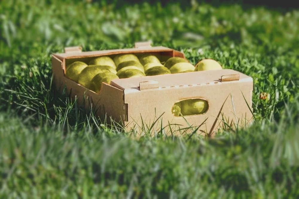 Коробки под овощи купить с доставкой