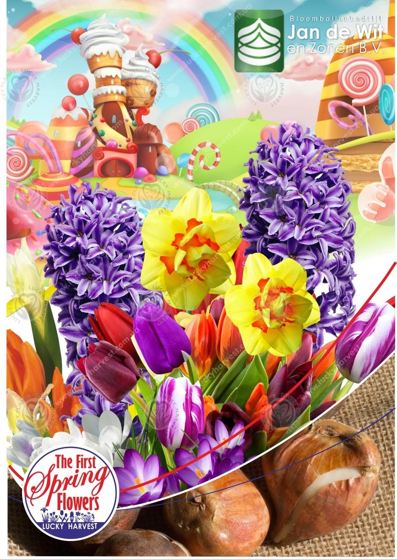 Смесь  Весеннецветущих Луковичных Цветов