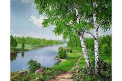 Картина раскраска по номерам 40x50 Березы у реки