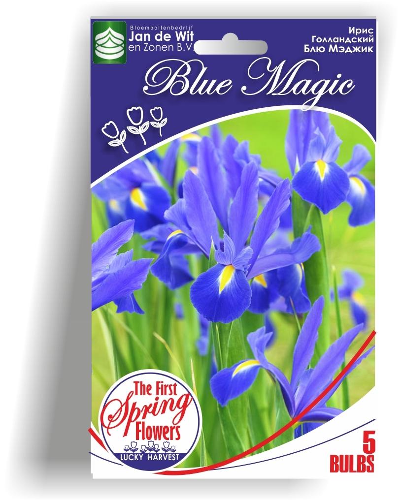 Ирис Голландский луковичный Blue Magic  ( Блу Мэджик  )