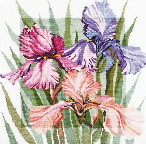 Цветущие ирисы