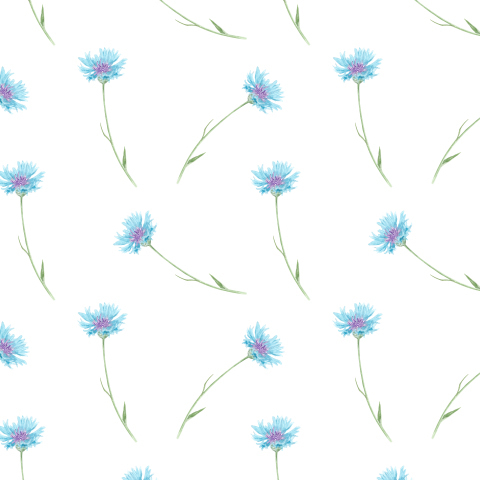 Васильки. Полевые цветы на белом