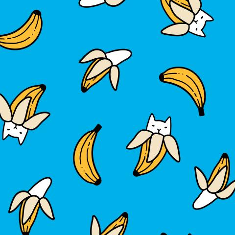 Бананокоты. Коты бананы. Фрукты. Banana cats