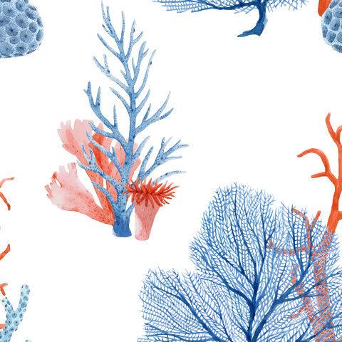 Кораллы и водоросли