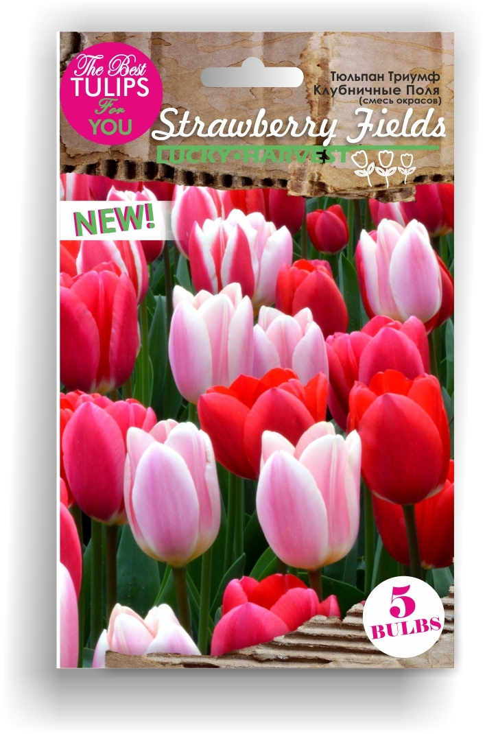 Тюльпаны Триумф  смесь  Strawberry Fields (Клубничные Поля) ТМ LUCKY HARVEST 5 шт (Мелкая луковица)