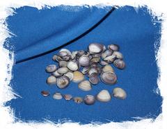 Морские ракушки фиолетовые