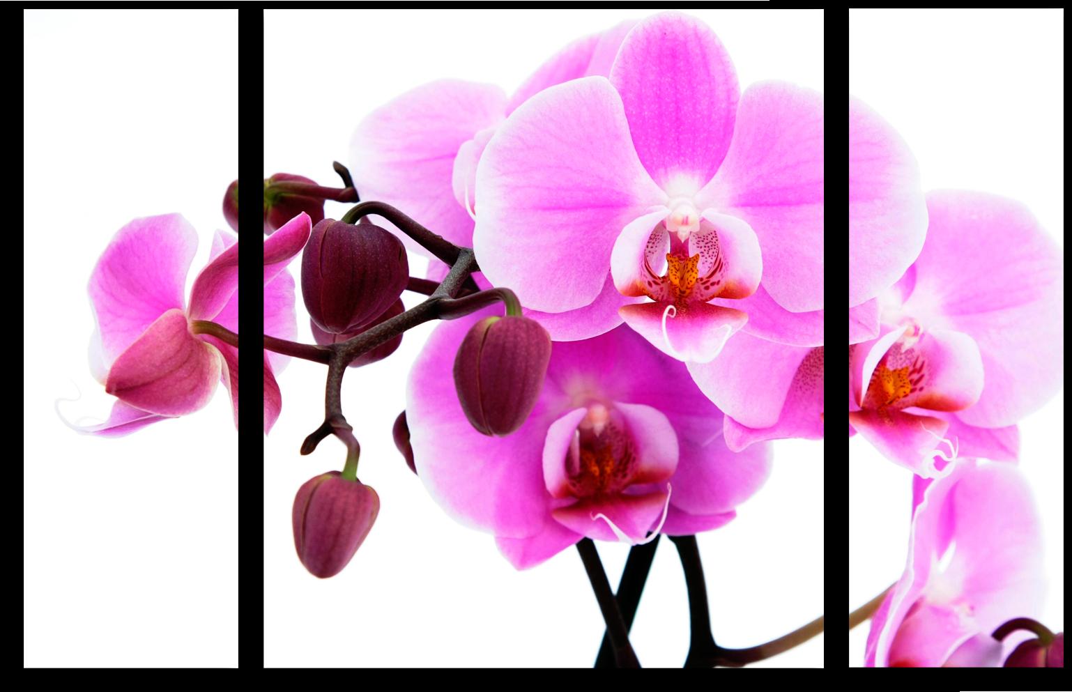 "Цветы Модульная картина ""Розовая орхидея"" М11.png"