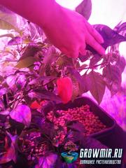 Гидропоника для всех - перчики выращиваем