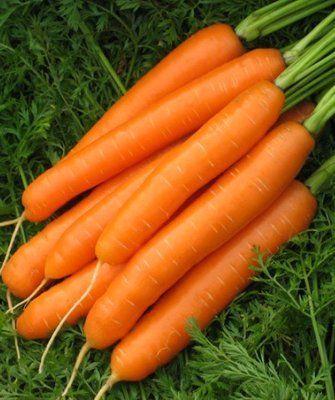Нантский Карведжо F1 семена моркови нантской (Seminis / Семинис) Карведжо_F1__Karvedgo_F1__семена_овощей_оптом.jpg