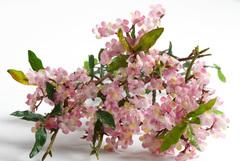 Ветка с мелкими цветами.