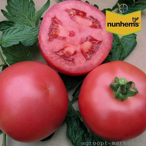 Nunhems Нейрон F1 семена томата индетерминантного (Nunhems / Нюнемс) нейрон.jpg