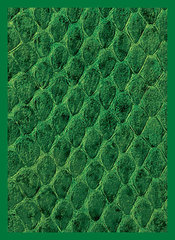 Legion Supplies - Dragon Hide Green Протекторы 50 штук