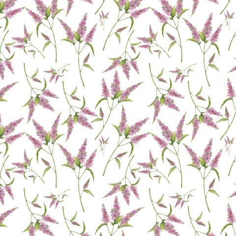 Фиолетовые цветы на белом фоне