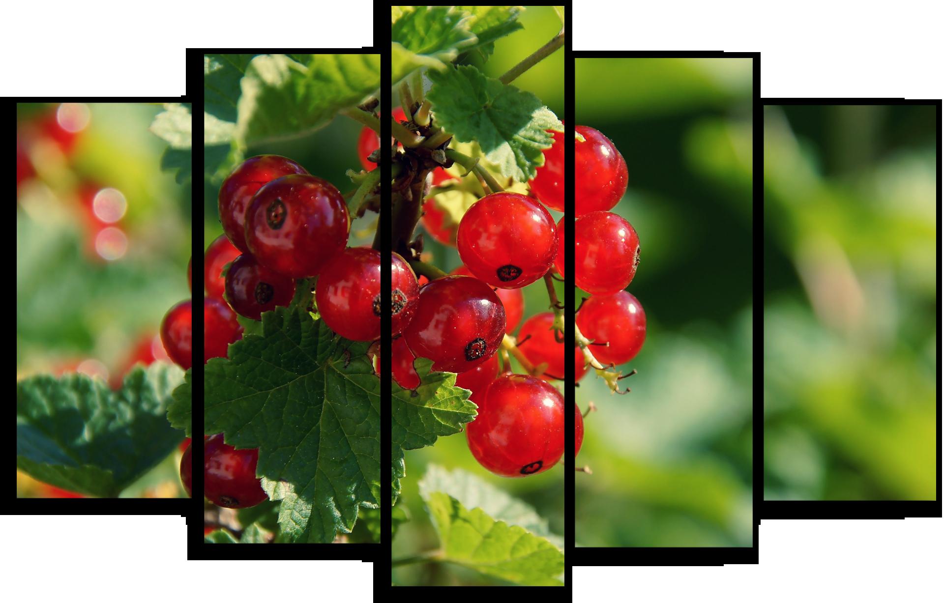 """Природа Модульная картина """"Спелые ягоды"""" М498.png"""