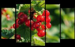 """Модульная картина """"Спелые ягоды"""""""