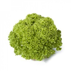 Лугано семена салата лолло блонда (Rijk Zwaan / Райк Цваан)