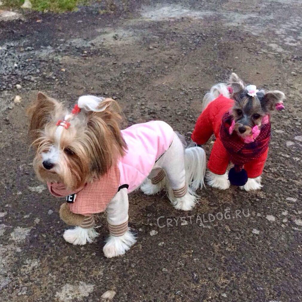 одежда для йорков puppyangel