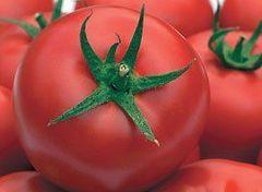 Гравитет F1 семена томата полудетерминантного (Syngenta / Сингента)
