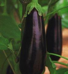 Фарама F1 семена баклажана (Clause / Клос)
