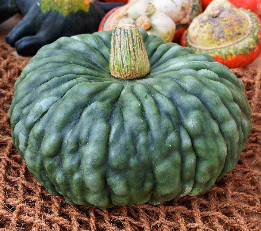 сорта тыквы с фото зеленого цвета узнала