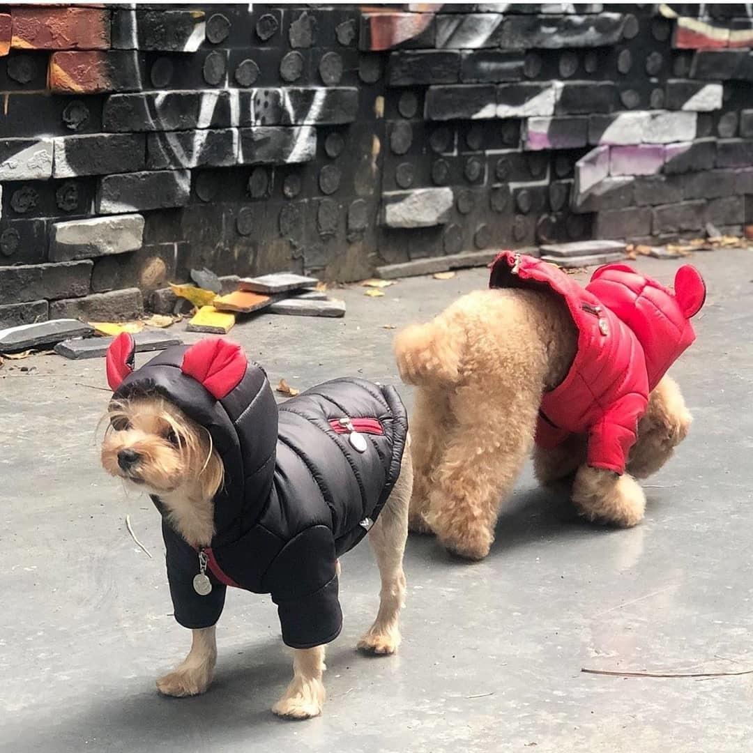 куртки для йоркширских терьеров