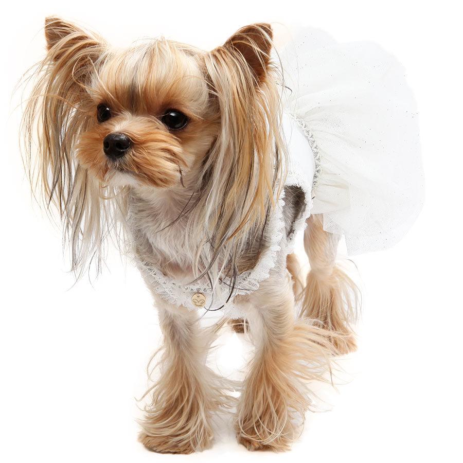 123 PA - Платья для собак