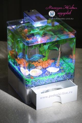 Мини аквариум куб 3 л с подсветкой №002