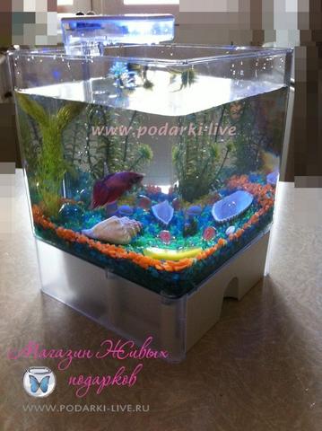 Мини аквариум куб 3 л с подсветкой №003