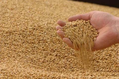 Пшеница 40кг