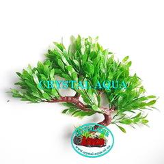 Растение Атман KA-174B