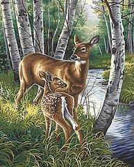 Картина раскраска по номерам 30x40 Олень с олененком