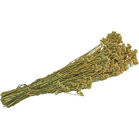 Пучок травяной из тысячелистника