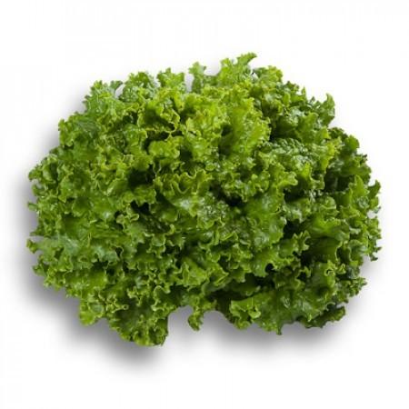 Семена салата для гидропоники купить прикормка конопля купить