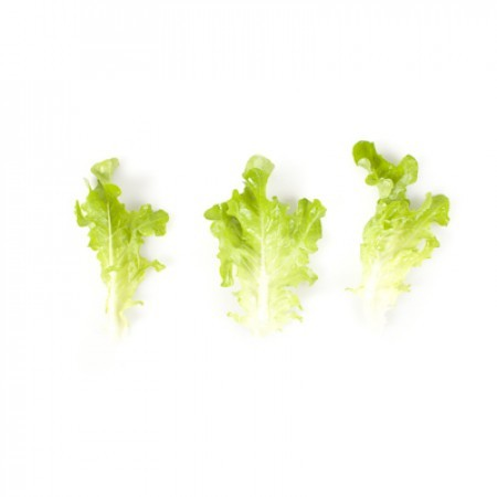 Rijk Zwaan Транвия семена салата дуболистного (Rijk Zwaan / Райк Цваан) ТРАНВИЯ_2.jpg