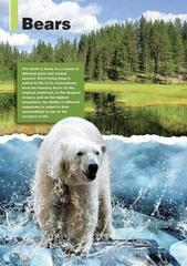 The Polar Bear (Discover Our Amazing World) reader. Книга для чтения