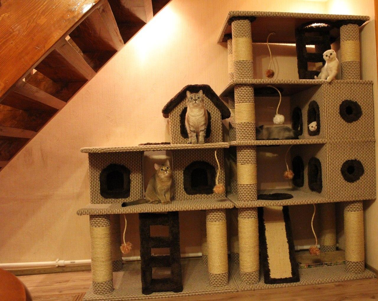 Картинки домик для котов