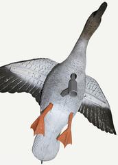 Чучело гуся белолобого, летящий