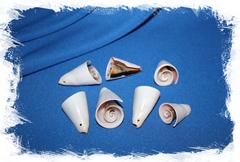 Срез морской ракушки с отверстием для серег или кулона