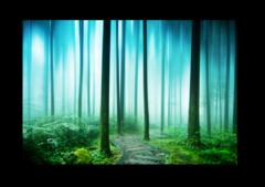 """Постер """"Таинственный лес"""""""
