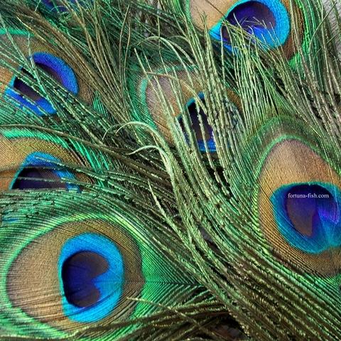 Перо павлина натуральное (2 шт)