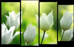 "Модульная картина ""Белые тюльпаны"""