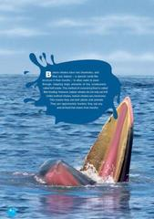 The Killer Whale (Discover Our Amazing World) Reader. Книга для чтения