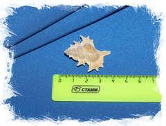 Биплекс перка (Gyrineum perca) размер