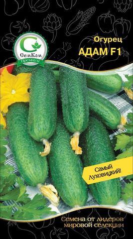 Семена Огурец Адам F1 (Bejo Zaden) 10 сем