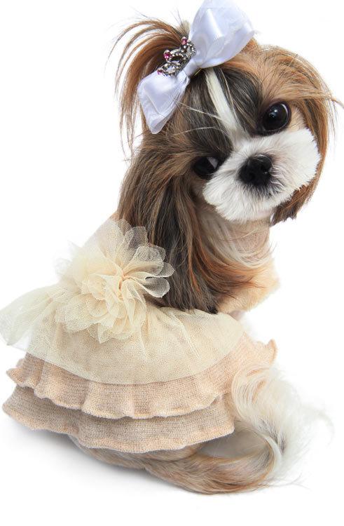 купить теплое платье для собак