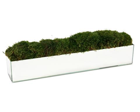 Natural Green Moss