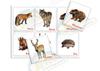 Лесные животные. Медведь и другие. Развивающие пособия на липучках Frenchoponcho (Френчопончо)